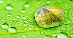 Dew-Drops of Prana