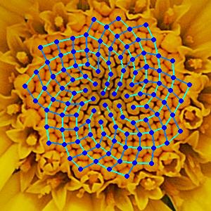 Fibonacci numbers in nature