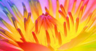 Fiery Lotus
