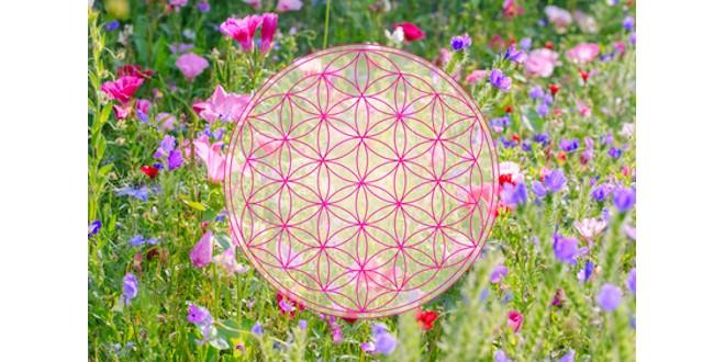 Flowers & Pattern