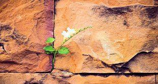 The Gentle Flower of Hope