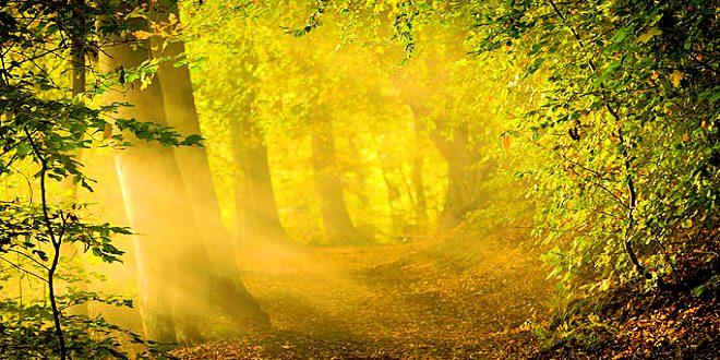 Living Substance of Light