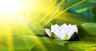 Unfolding Petals of the Heart