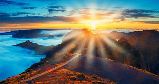 Pathway of Light