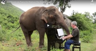 Beethoven on Piano for Romsai the Elephant