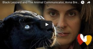 Black Leopard and The Animal Communicator, Anna Breytenbach