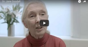 dr jane goodall speaks on One Humanity Institute