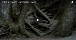 intelligent trees trailer