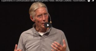 Experiments in Communication with Morphogenetic Fields | Michael Lindfield