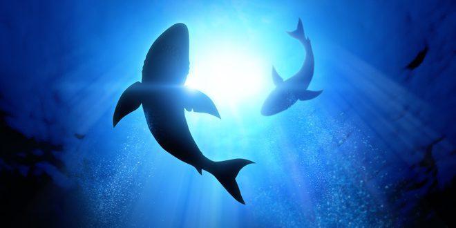 pisces 2 sharks