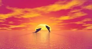 Pisces Sun – Virgo Full Moon 2016