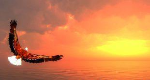 scorpio eagle