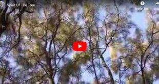 spirit of the tree video